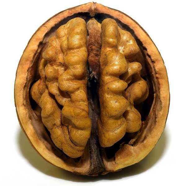 Et si la santé de notre cerveau passait par l\'assiette ?